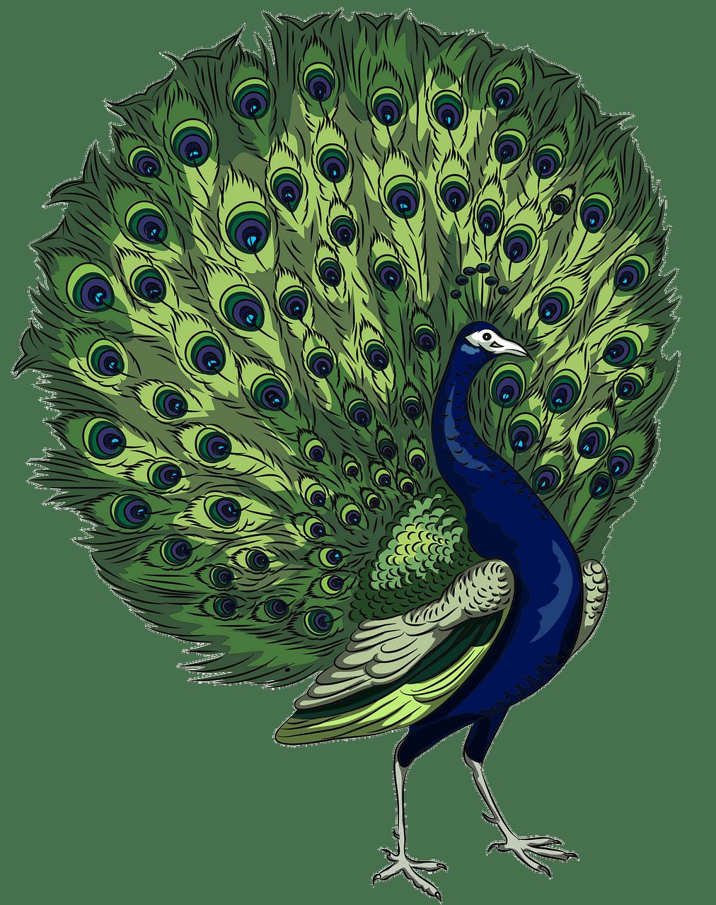 clip art Free download creazilla . Peacock clipart.