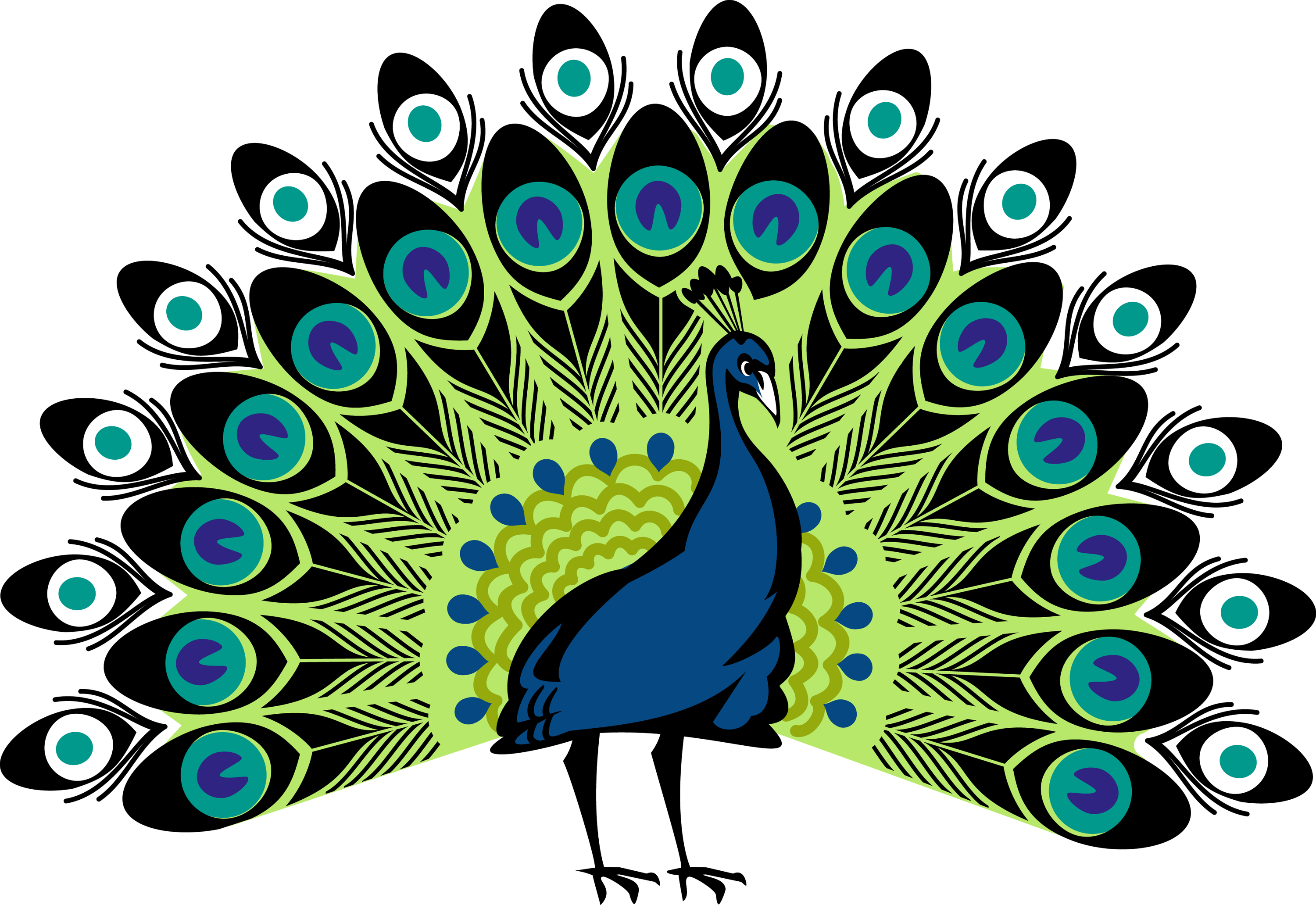 picture library download hera drawing peacock #97662531