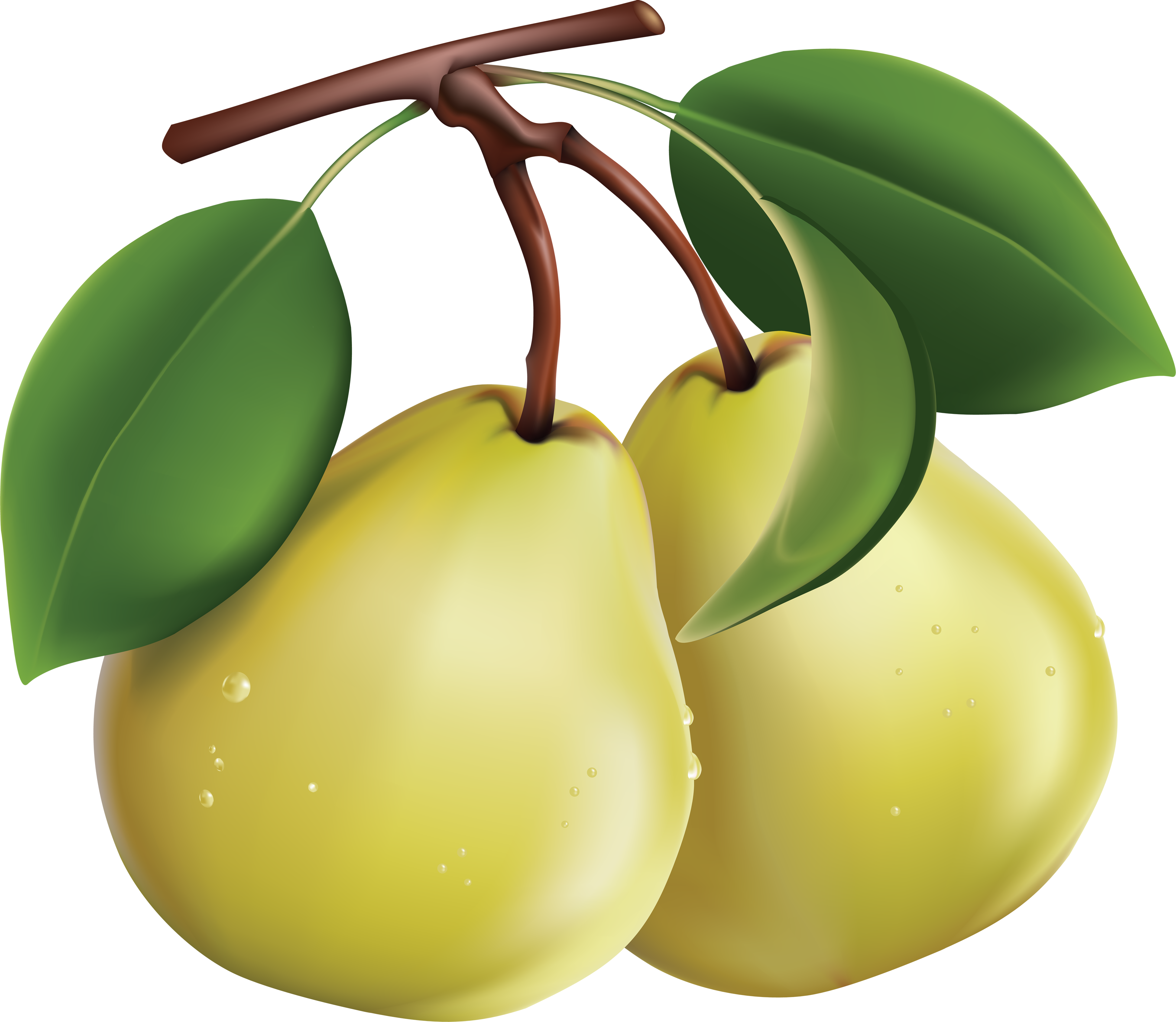 vector black and white Different fruit free on. Pear clipart