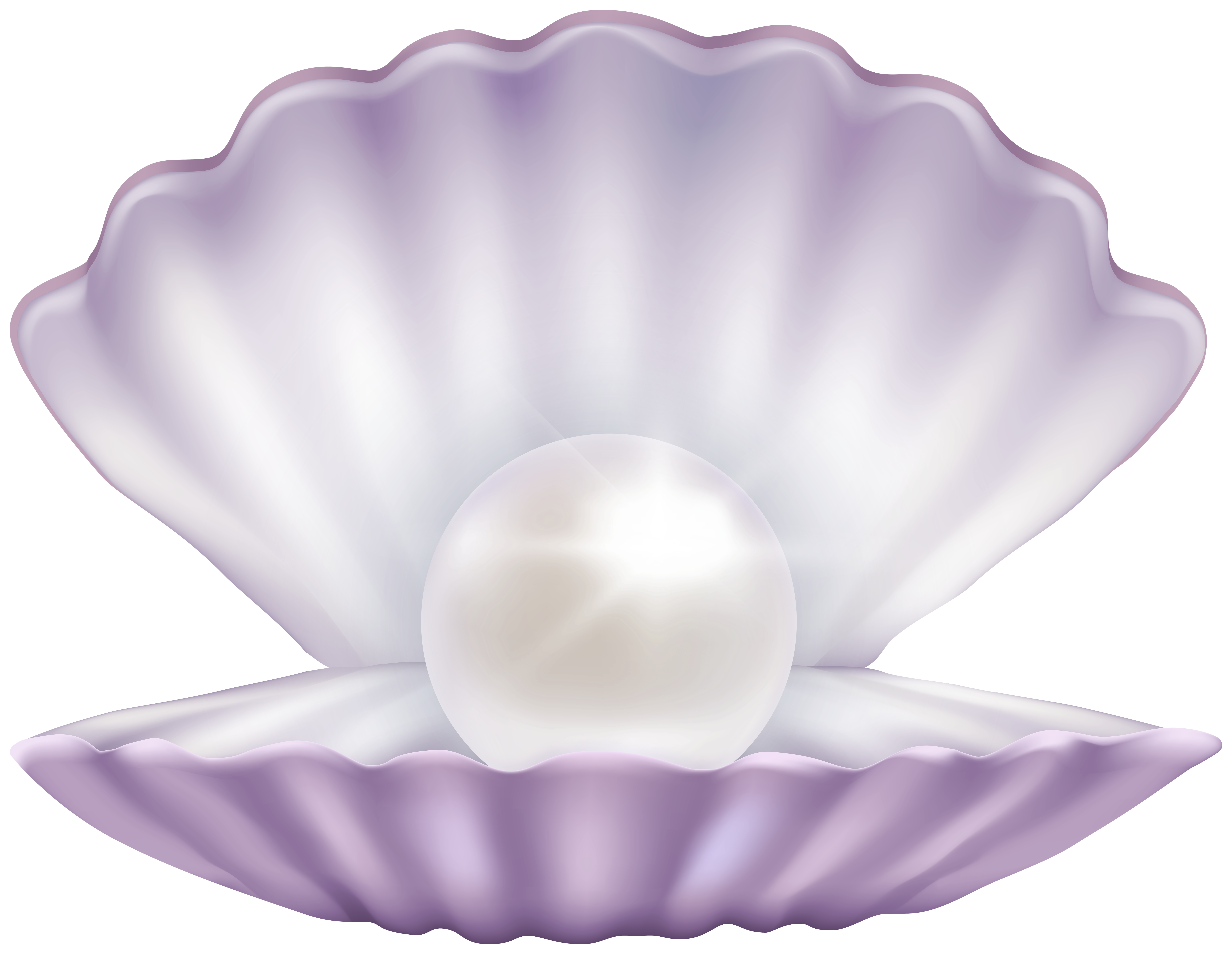 banner transparent download Clam with pearl clipart. Png gallery yopriceville high.