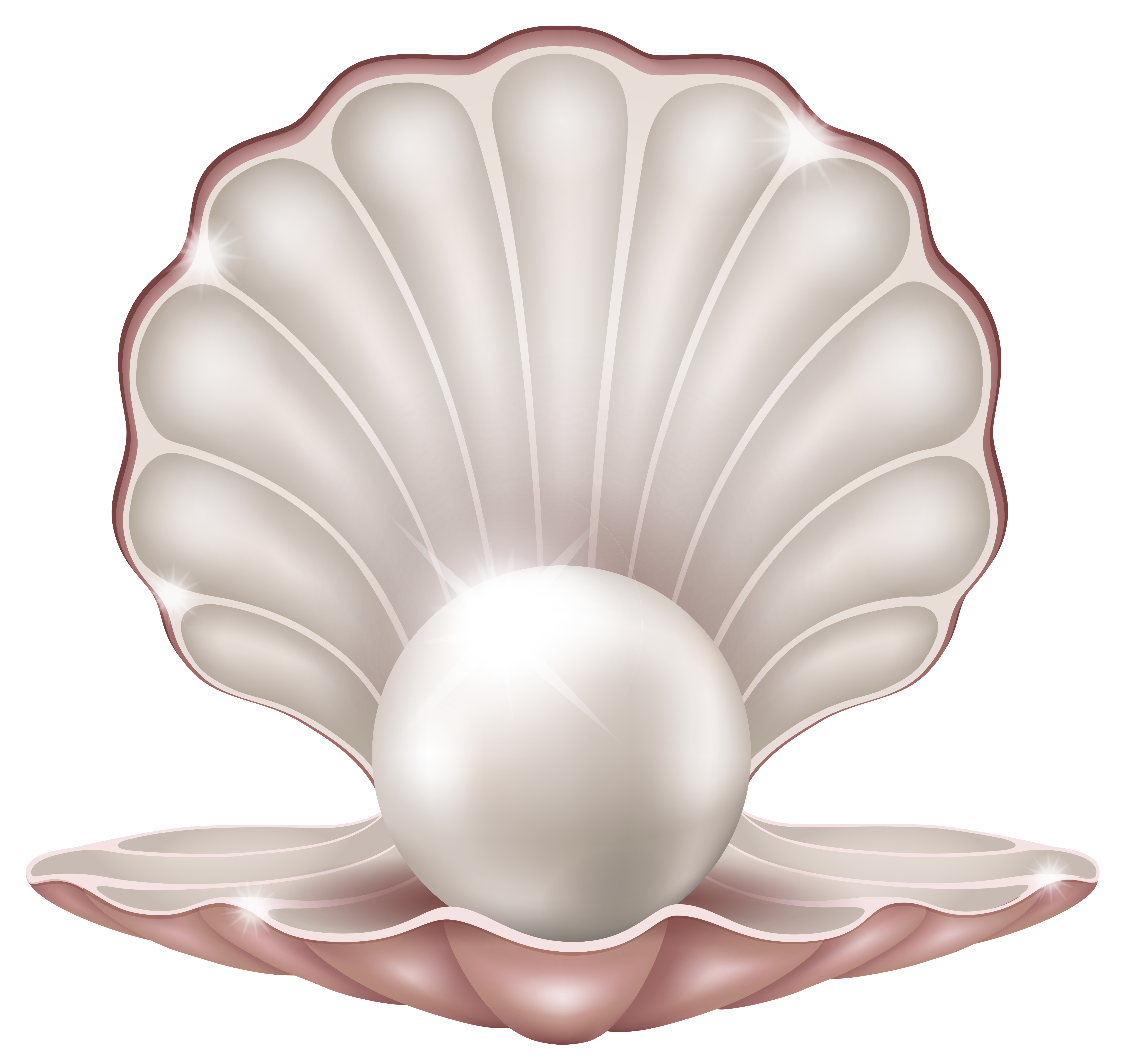 graphic library library Beautiful clam with png. Pearl clipart.