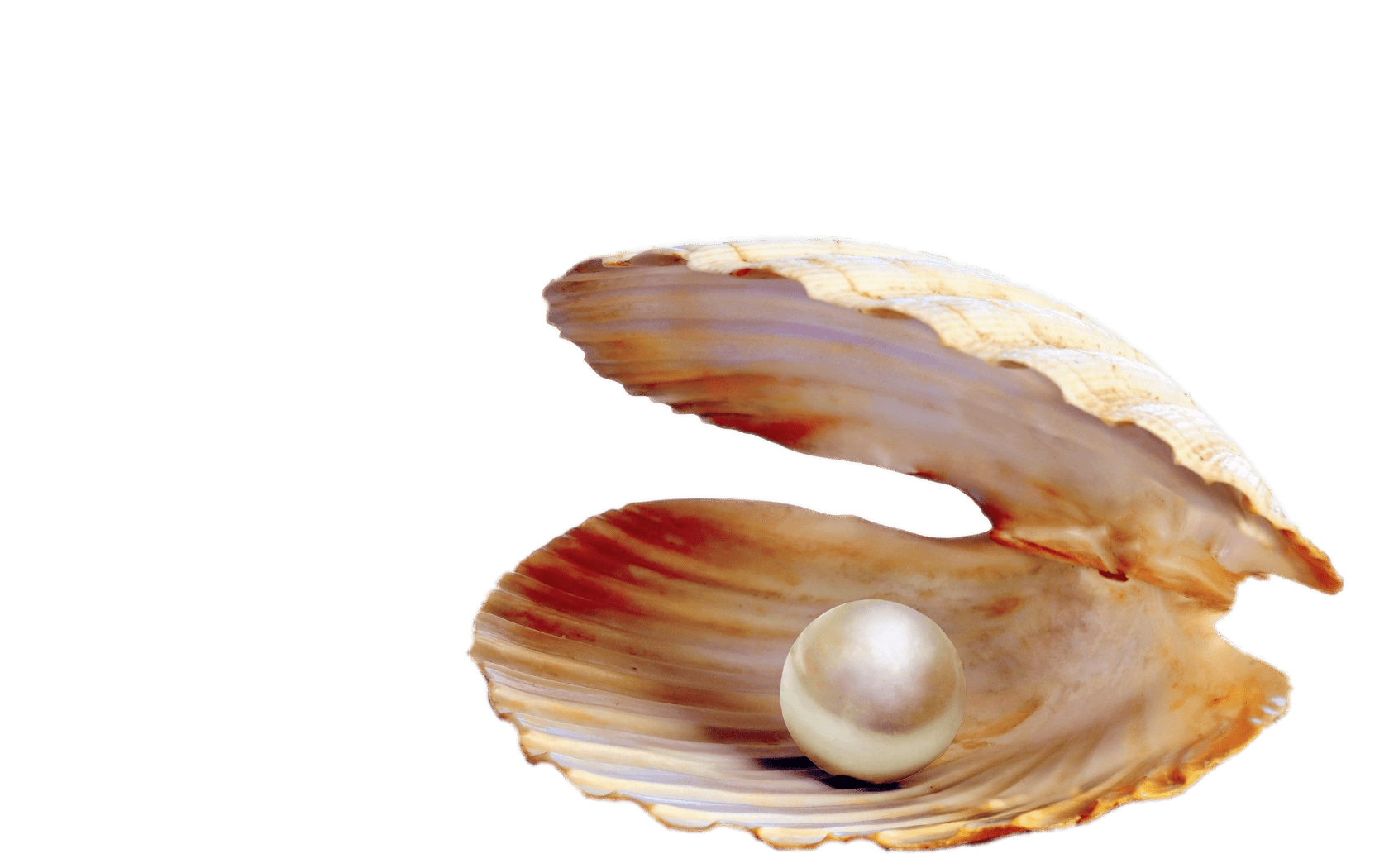 vector freeuse library Pearl In Shell transparent PNG