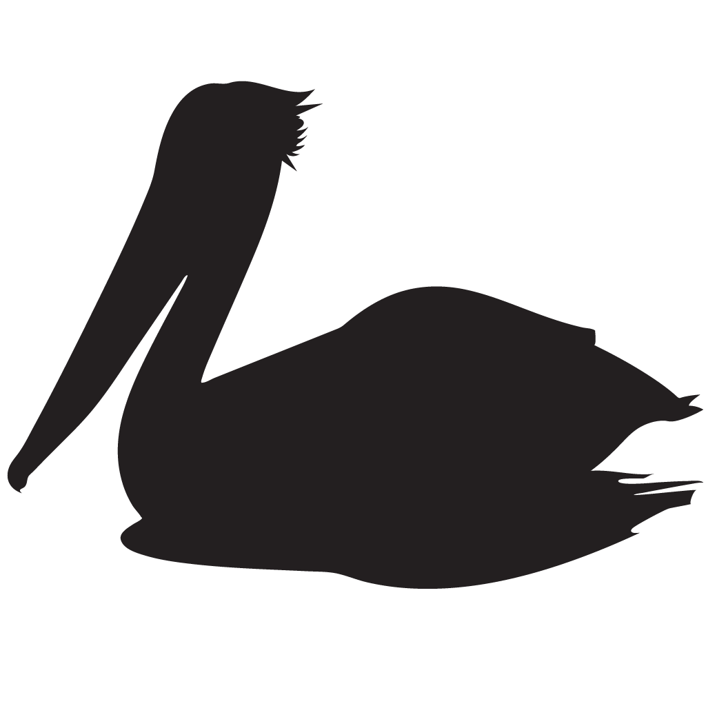 png transparent stock Brown Pelican Overview