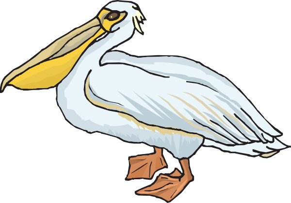 picture freeuse Free cliparts download clip. Pelican clipart.