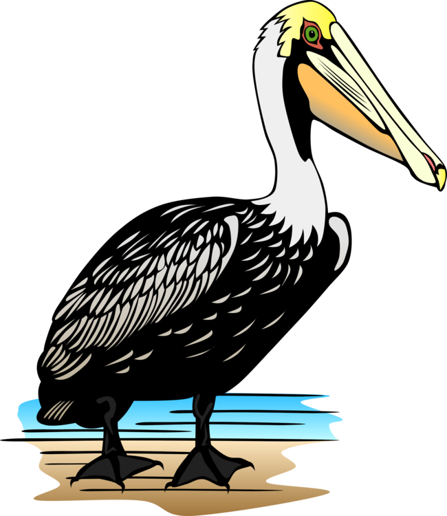 svg free download Pelican Download Drawing Cartoon free commercial clipart