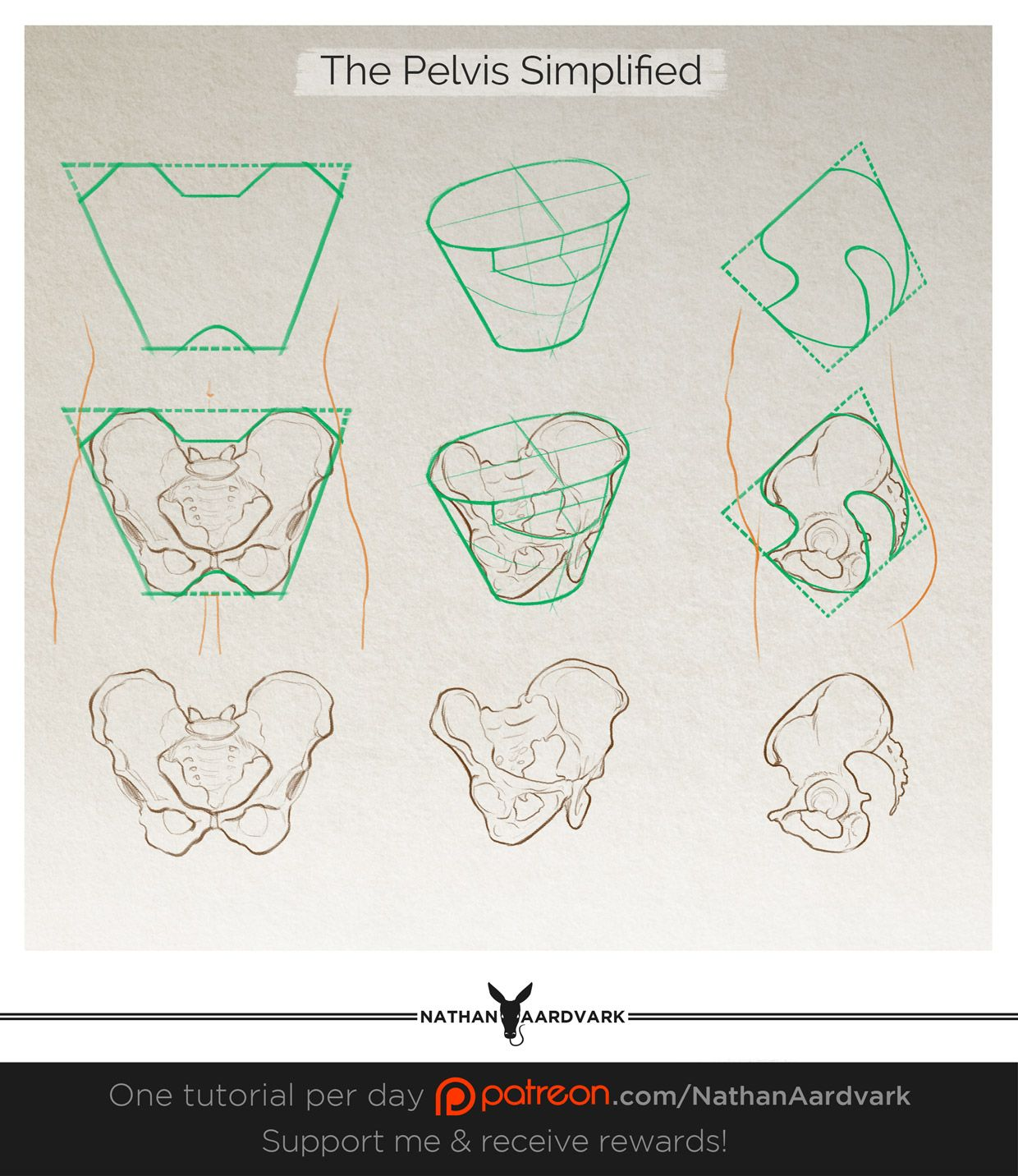 image freeuse library Pelvis drawing. Tutorial the simplified art