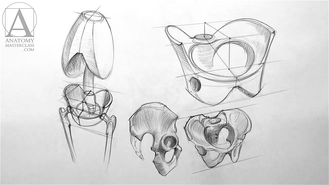 svg black and white library Anatomy master class . Pelvis drawing