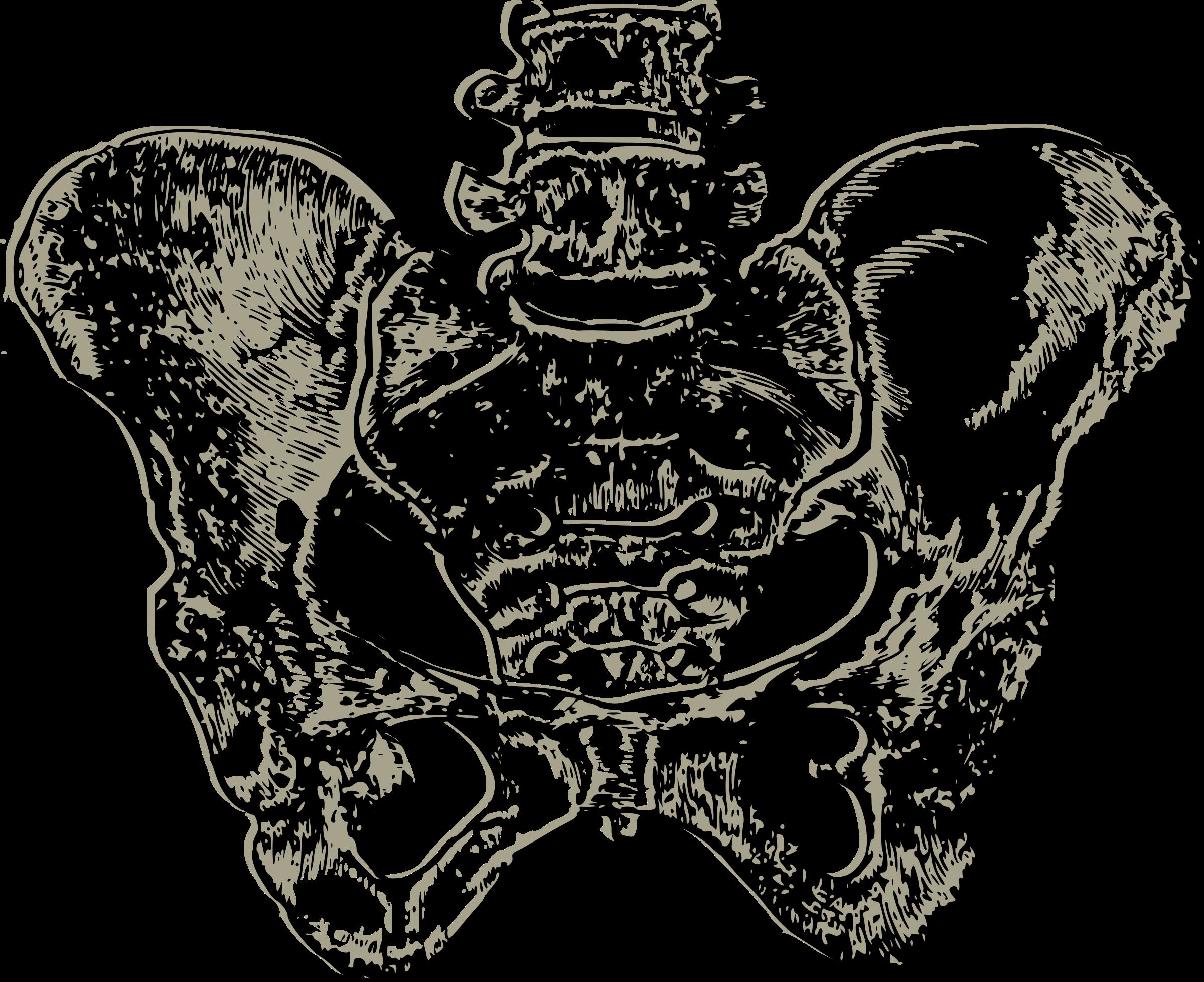 png royalty free download Hip bone clip art. Pelvis drawing