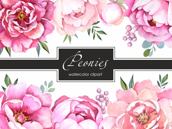 banner free library Peonies clipart. Pink peony watercolor flowers
