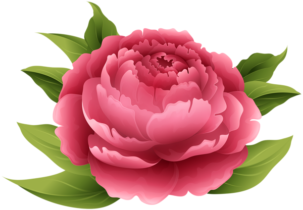 svg freeuse download Red peony png clip. Peonies clipart