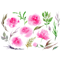 image freeuse library Download peony free png. Peonies clipart