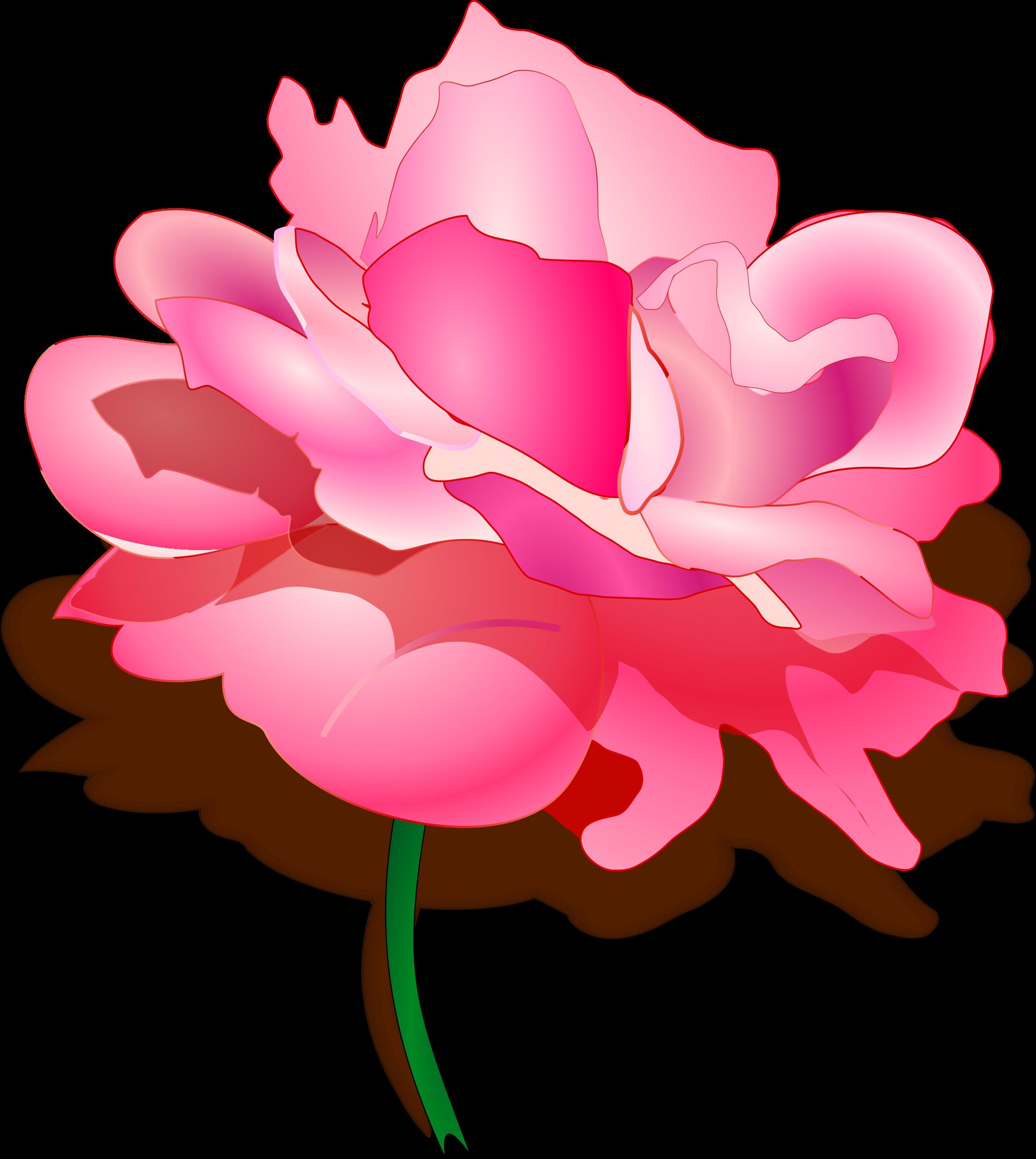 image transparent download Rose big image png. Peony clipart illustrated