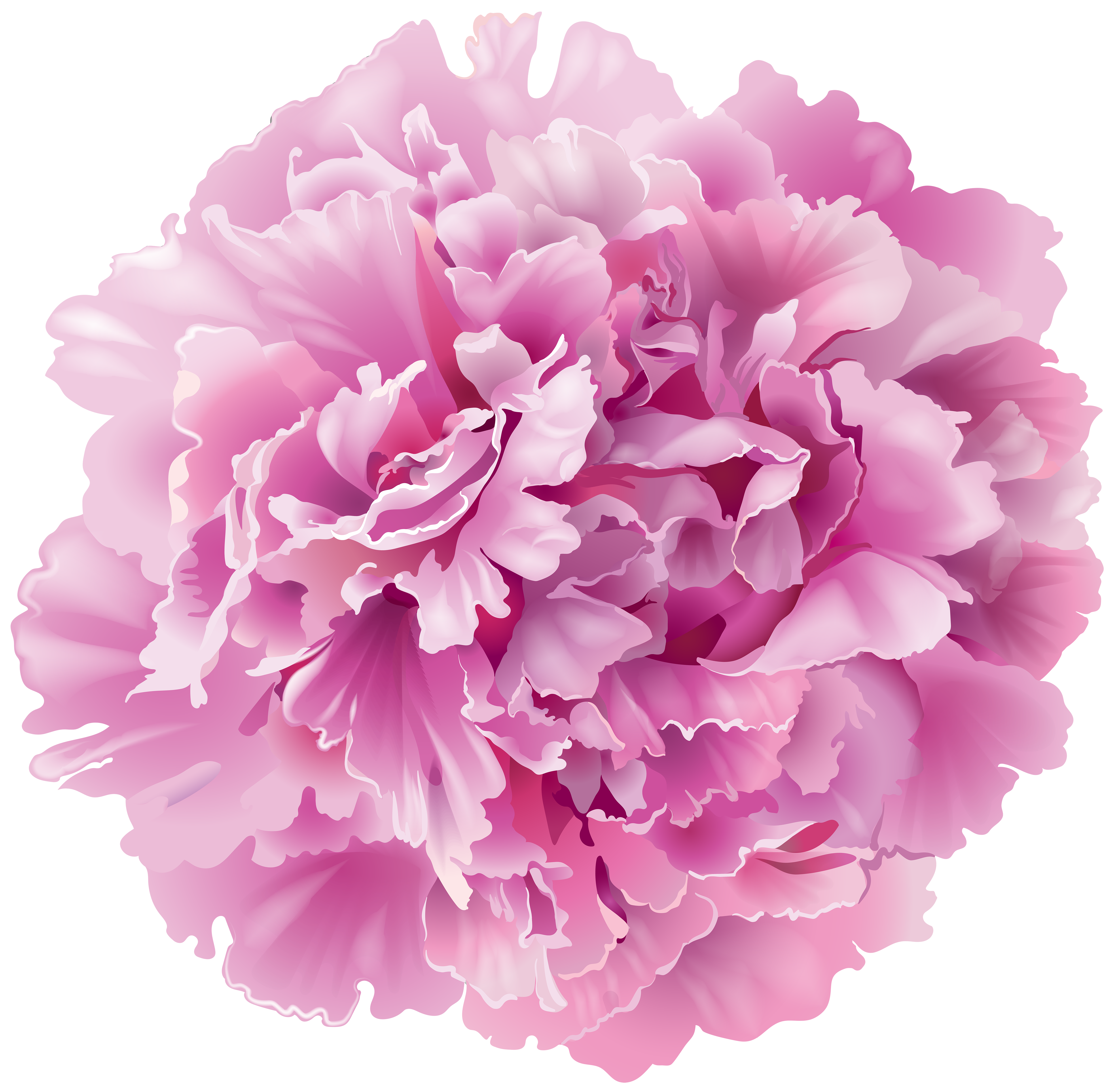 picture freeuse stock Transparent png clip art. Peony clipart.