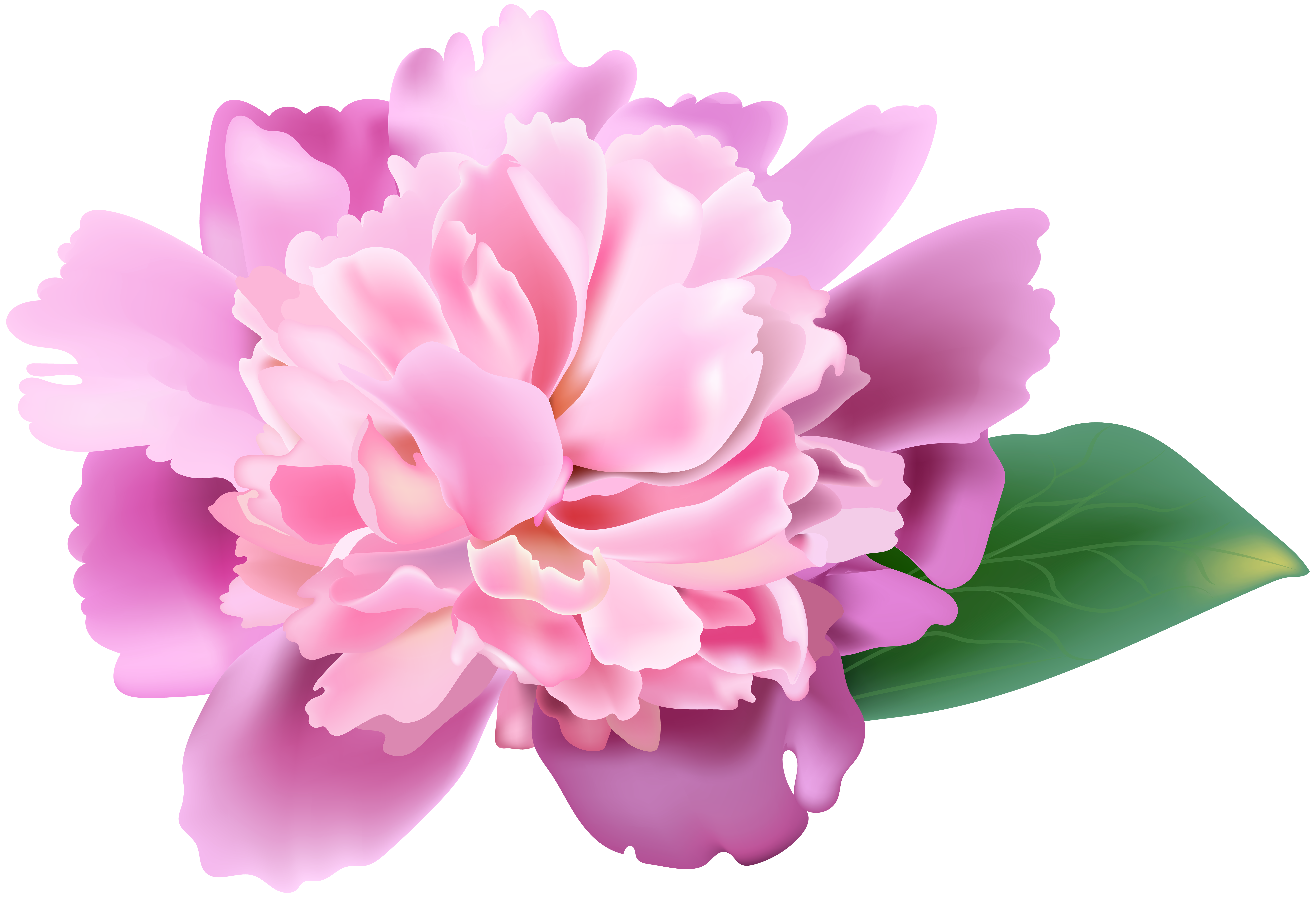 svg download Peony clipart. Pink png clip art.