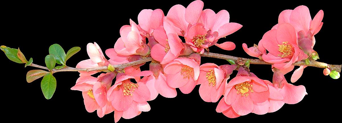 banner free download spring transparent floral #103606322