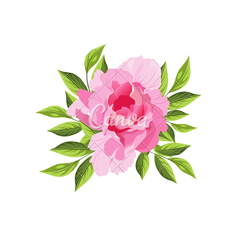 banner royalty free library Peony Hand Drawn Realistic Illustration