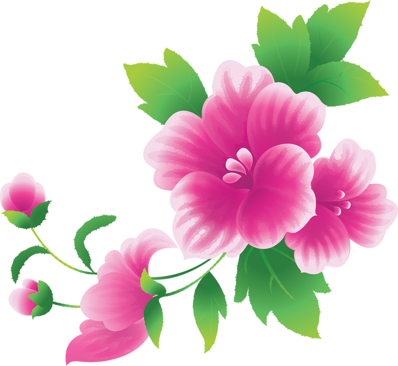 vector library Peony clipart illustrated. Gabby s furniture color