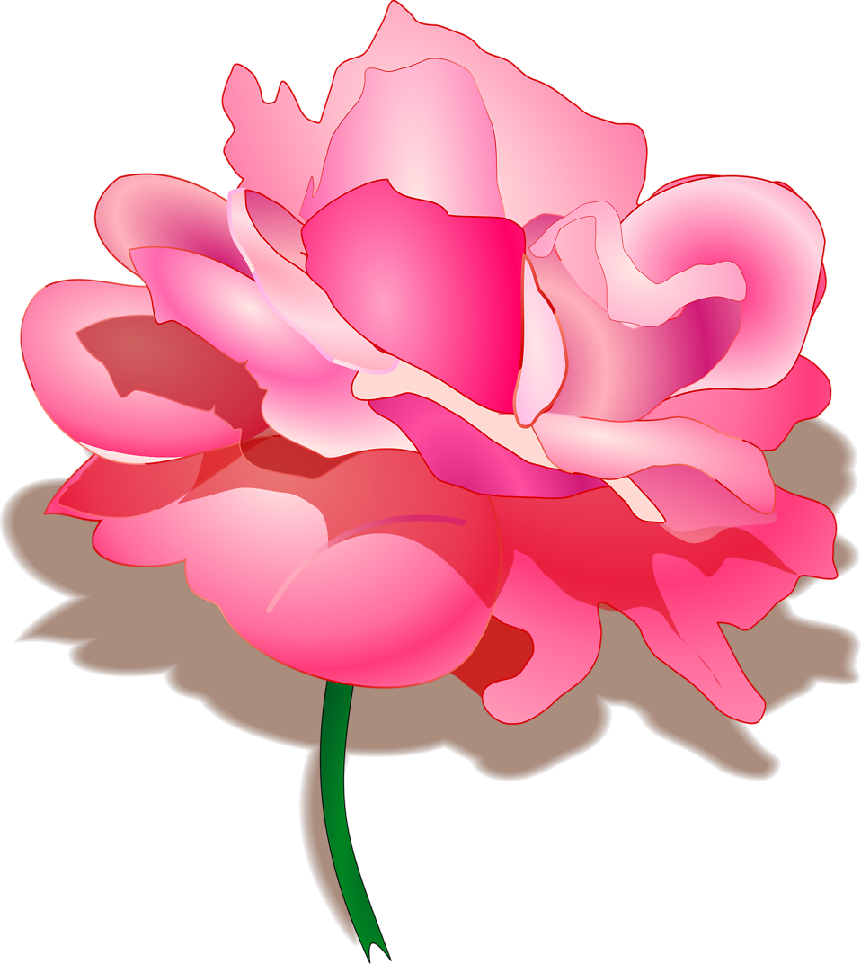 clip art freeuse Rose free stock photo. Peony clipart illustrated