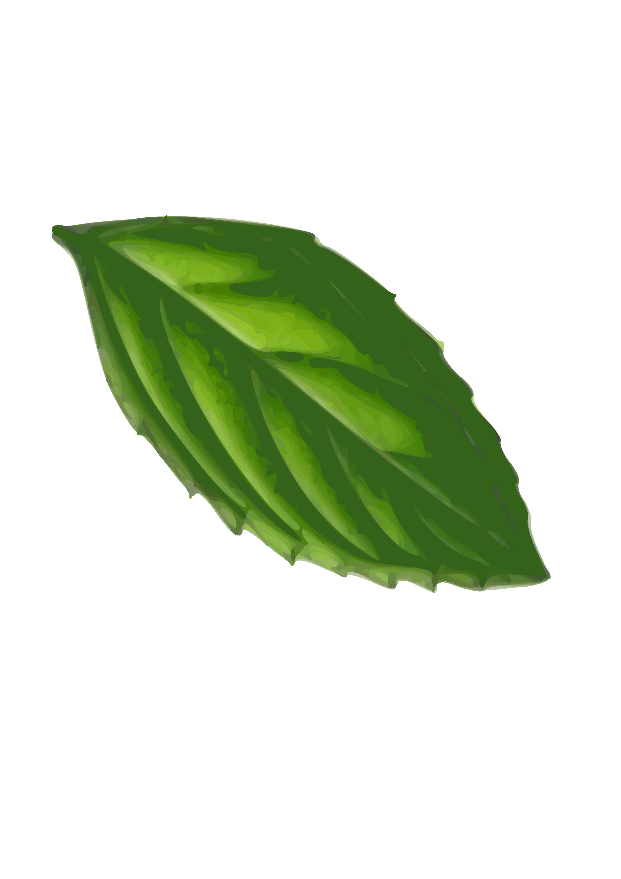 svg free library Leaf at getdrawings com. Basil drawing mint