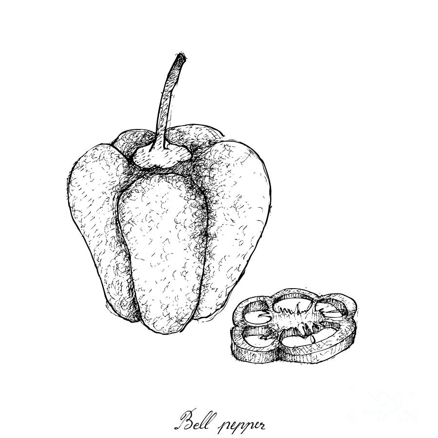 graphic royalty free Peppers drawing. Hand drawn of fresh