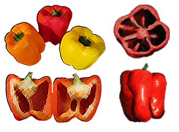 clipart transparent Peppers drawing. Bell pepper at getdrawings