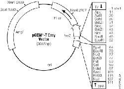 black and white Pgemteasy vector. Pgem t easy systems