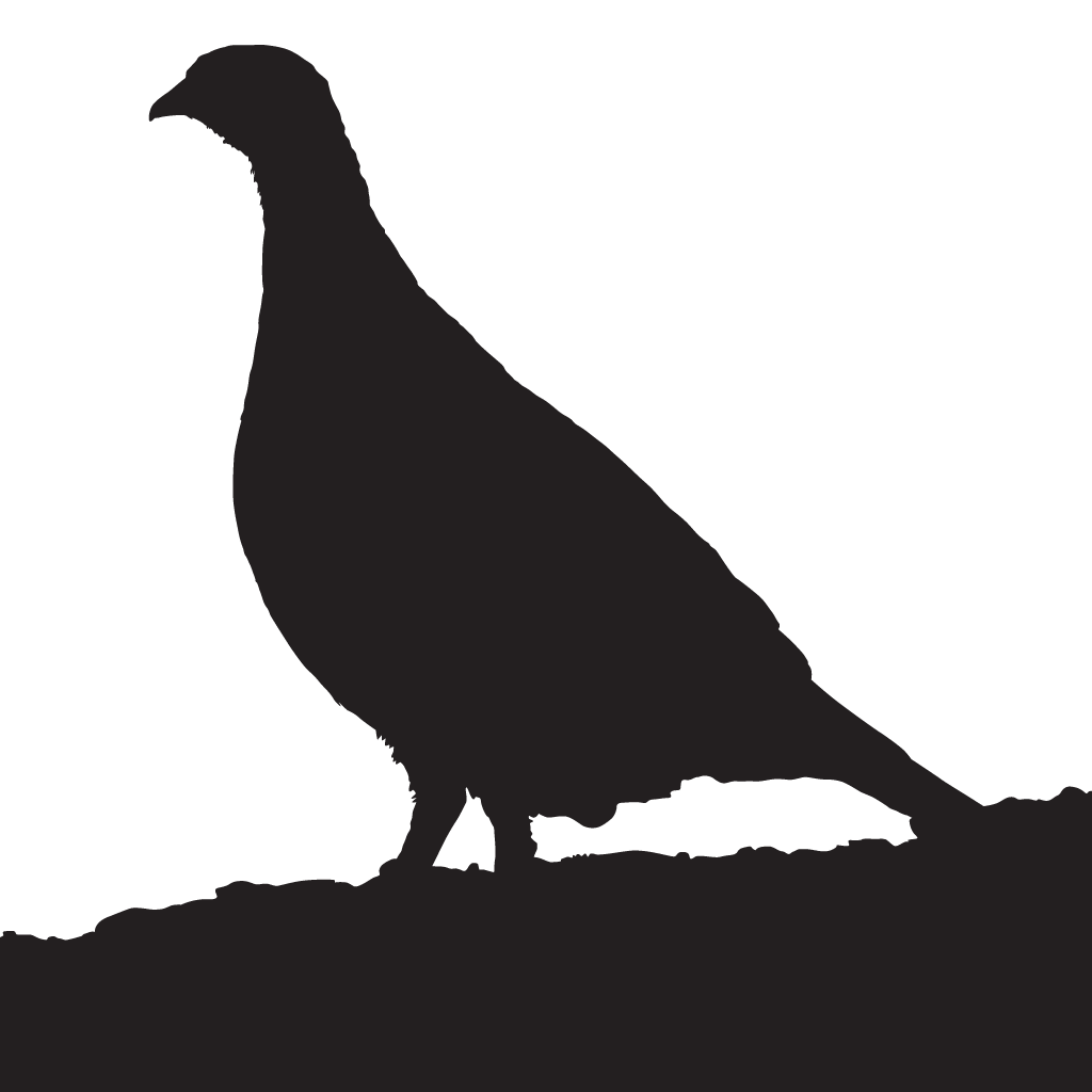 image freeuse stock pheasant drawing different breed #101198123