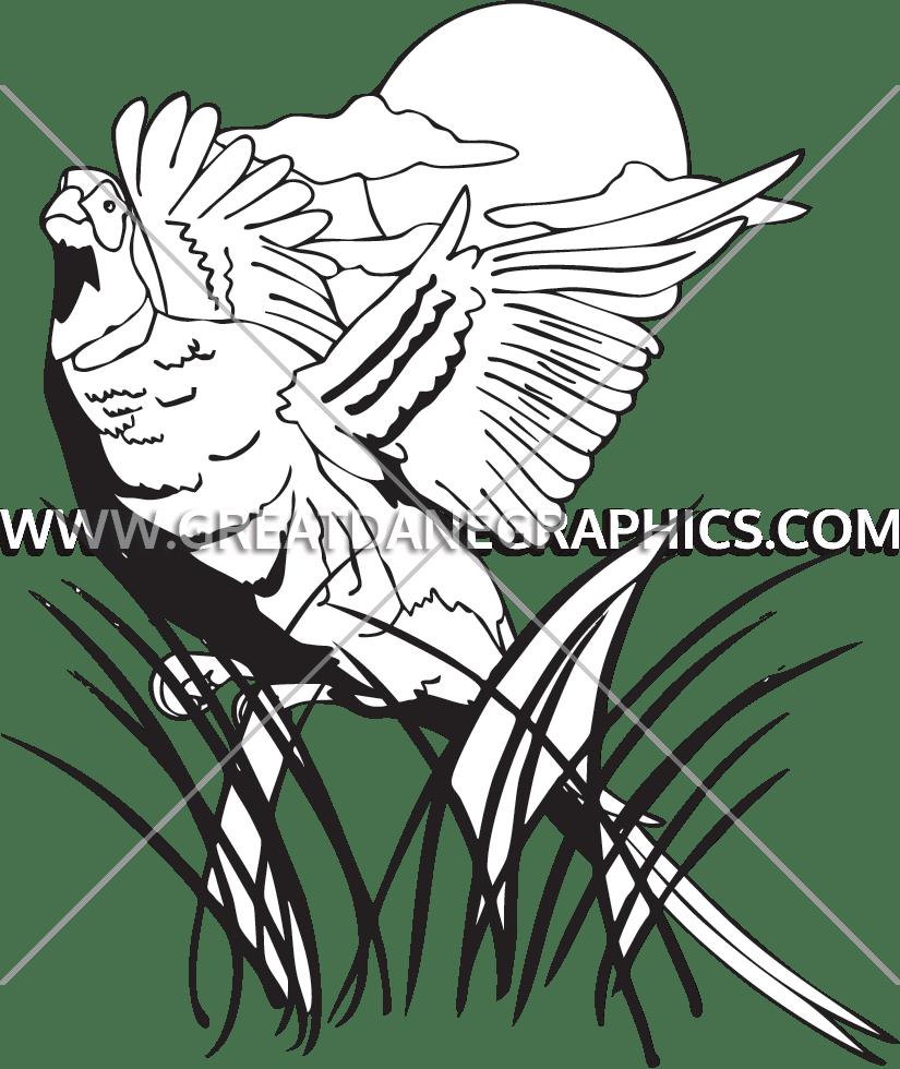 image transparent library Pheasant