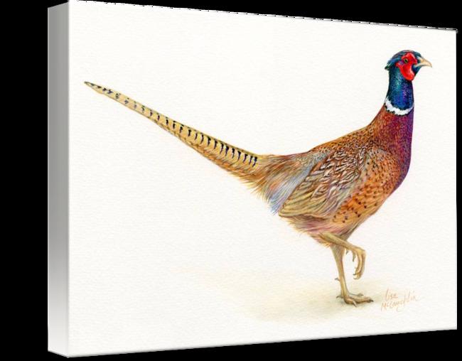 clipart freeuse stock pheasant