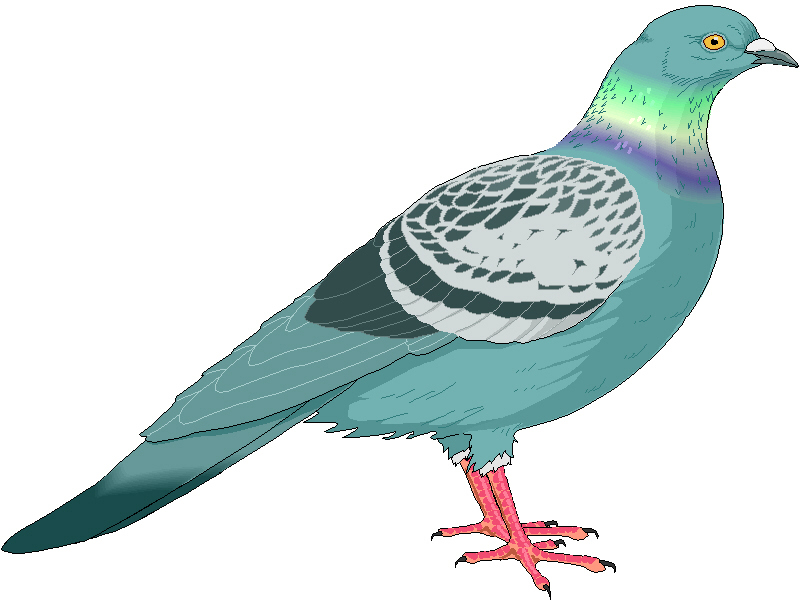 image download Free cliparts download clip. Pigeon clipart.
