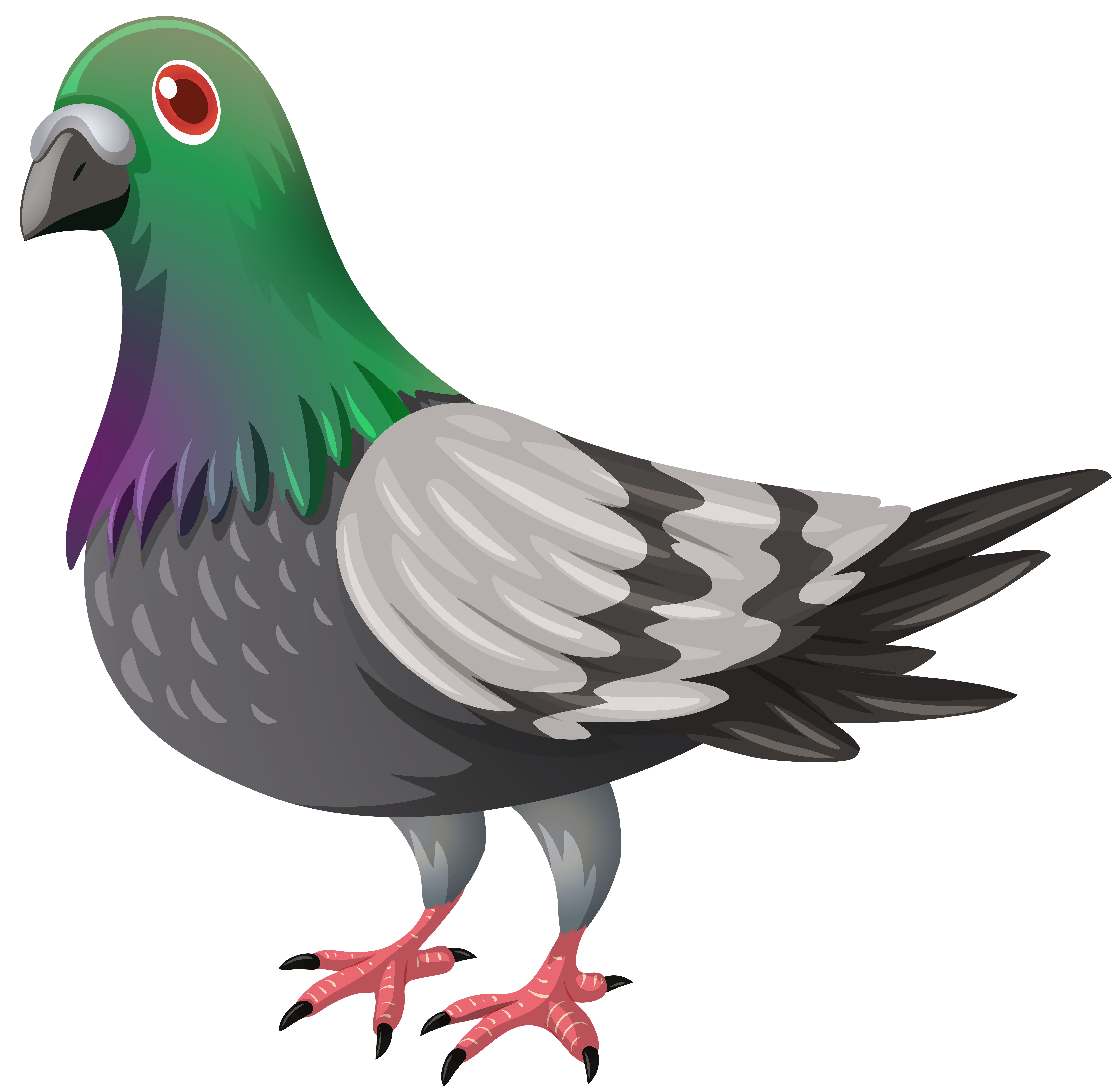 clip art library Background transparentpng . Pigeon clipart.