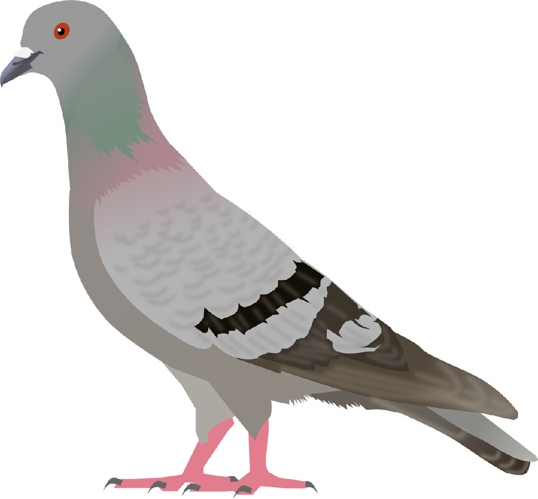 banner Png pinterest animal. Pigeon clipart