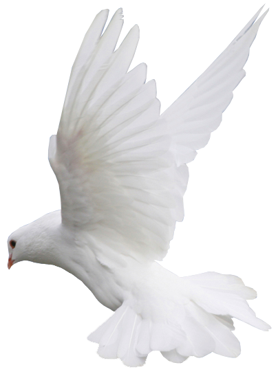 vector freeuse library White Dove Flight PNG Clipart