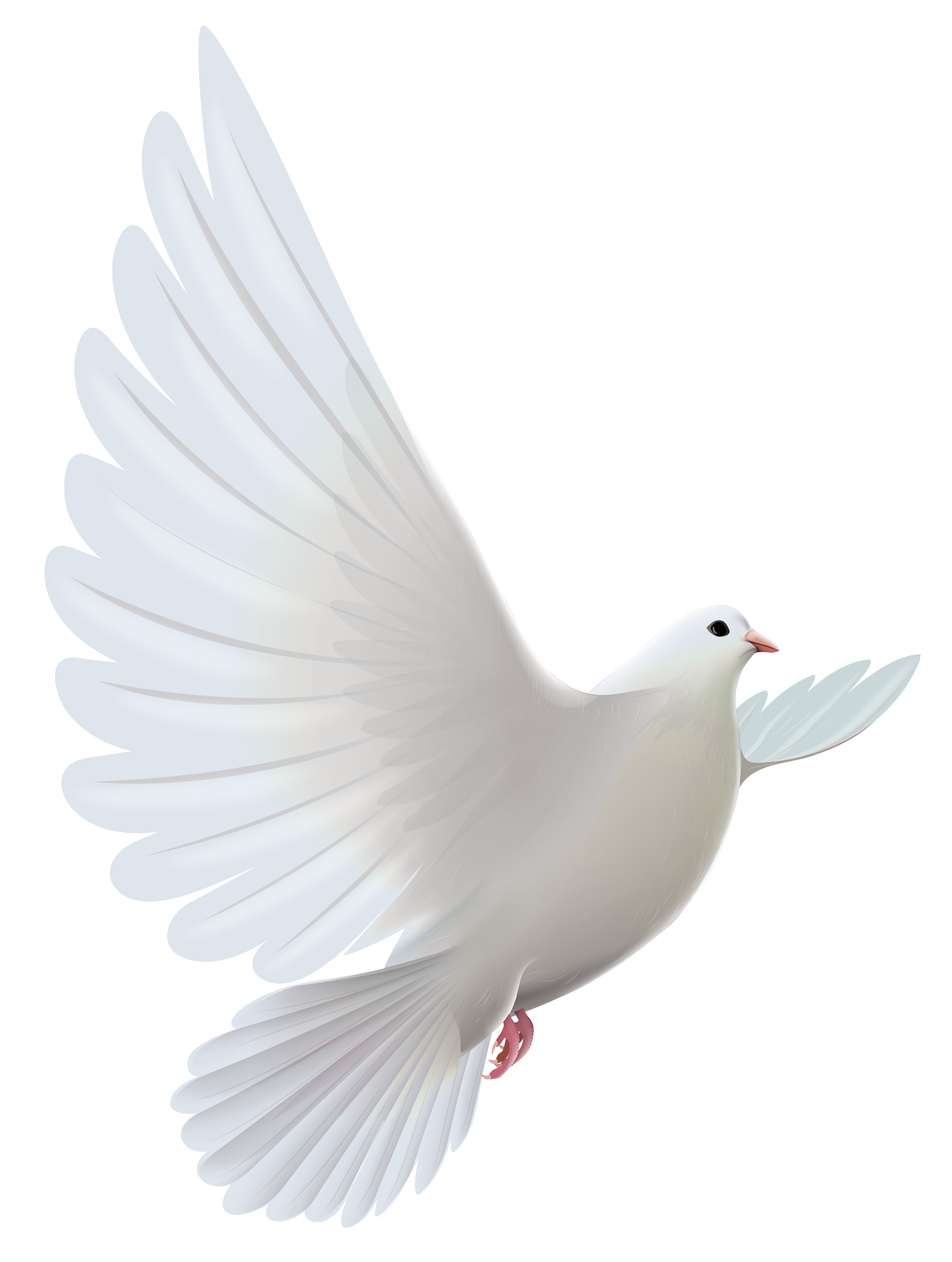 png black and white stock White dove transparent png. Funeral doves clipart