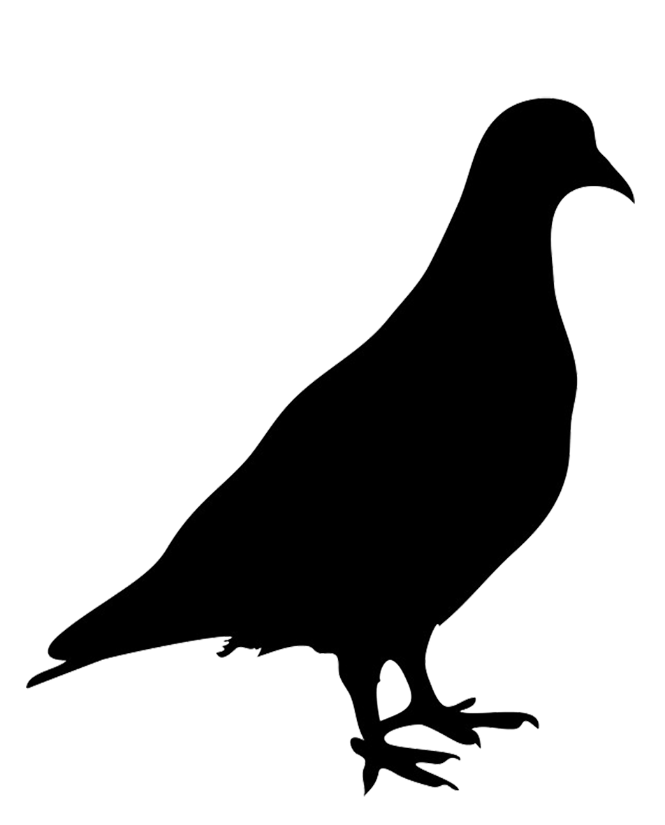 image download Pencil and in color. Pigeon clipart silhouette