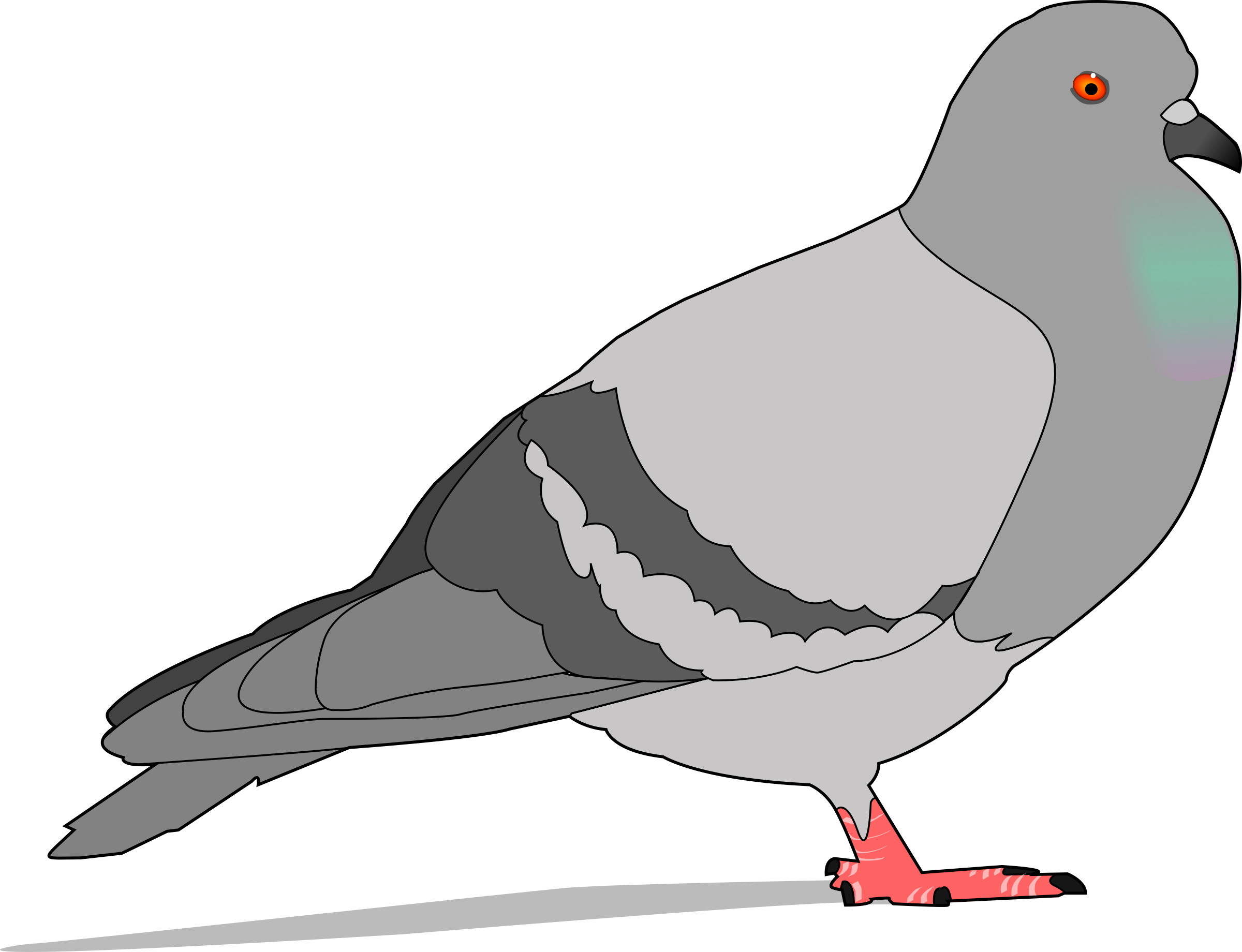 graphic transparent download Pidgeon free on dumielauxepices. Pigeon clipart
