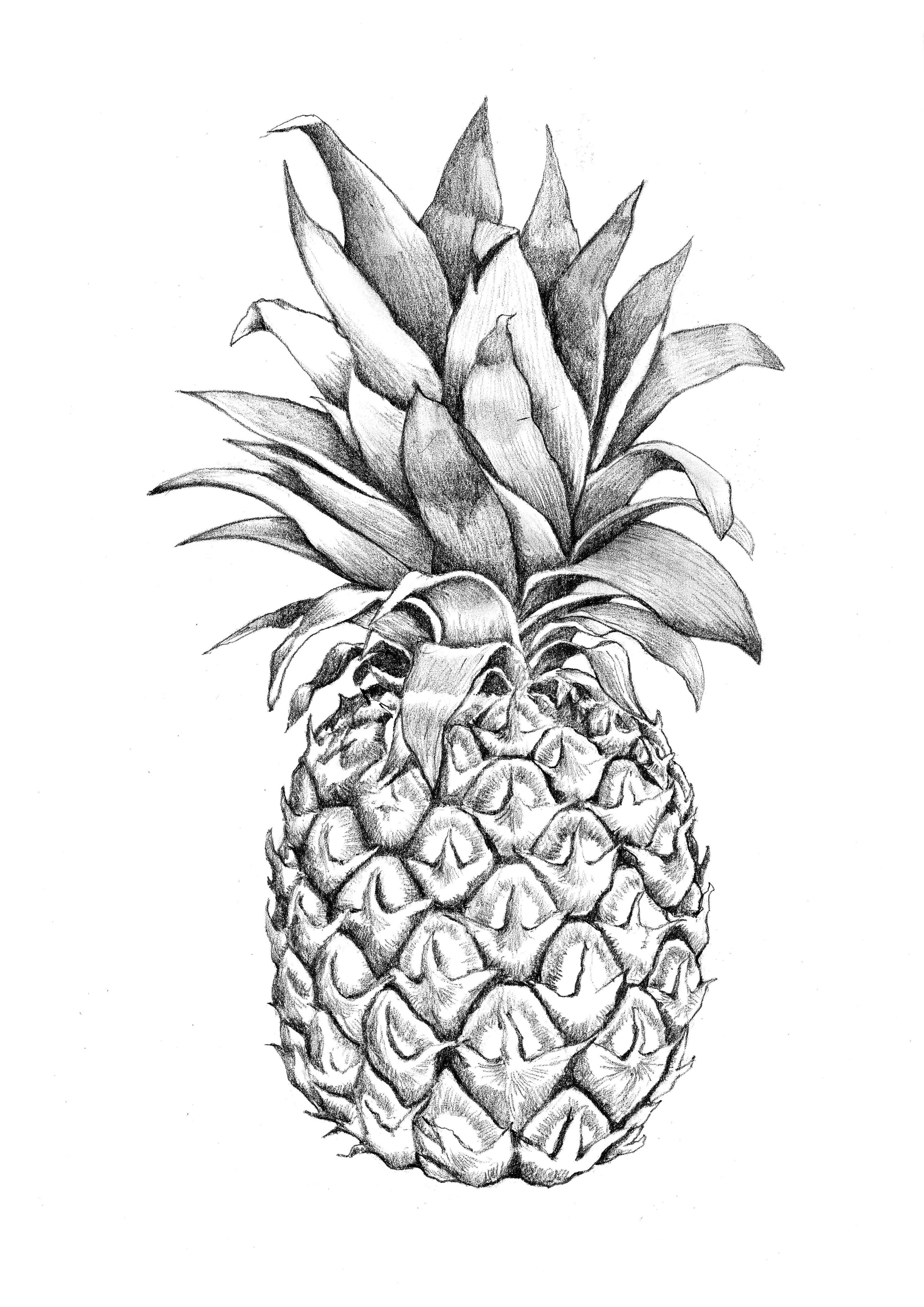 banner black and white Images for pineapple graphic. Pineapples drawing
