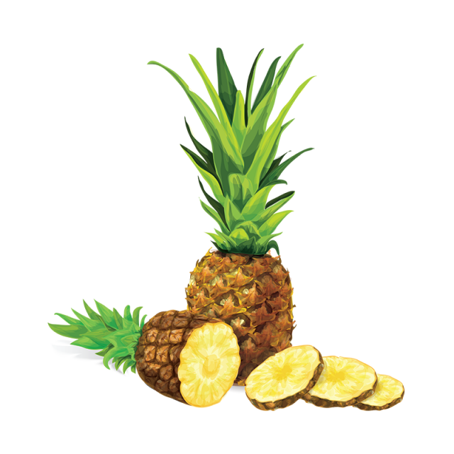 vector library stock Pinapple vector. Pineapple illustration png and