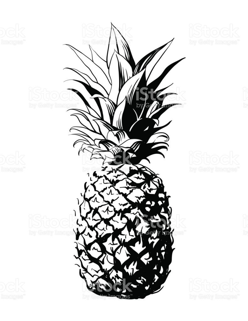clip black and white Pinapple vector. Image result for pineapple