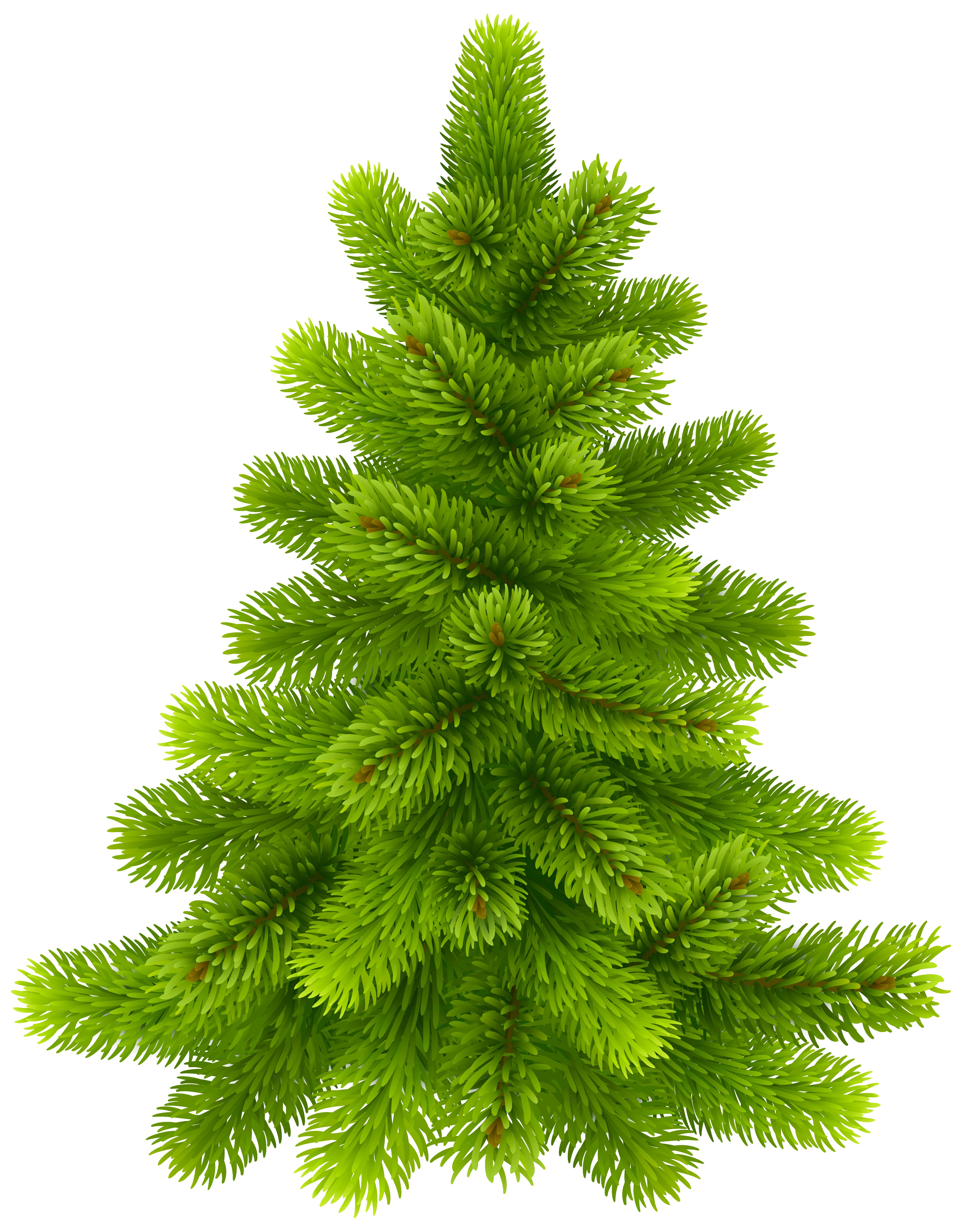 picture royalty free download Pine clipart. Tree png clip art