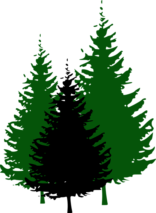 png royalty free library Forest tree free on. Pine clipart