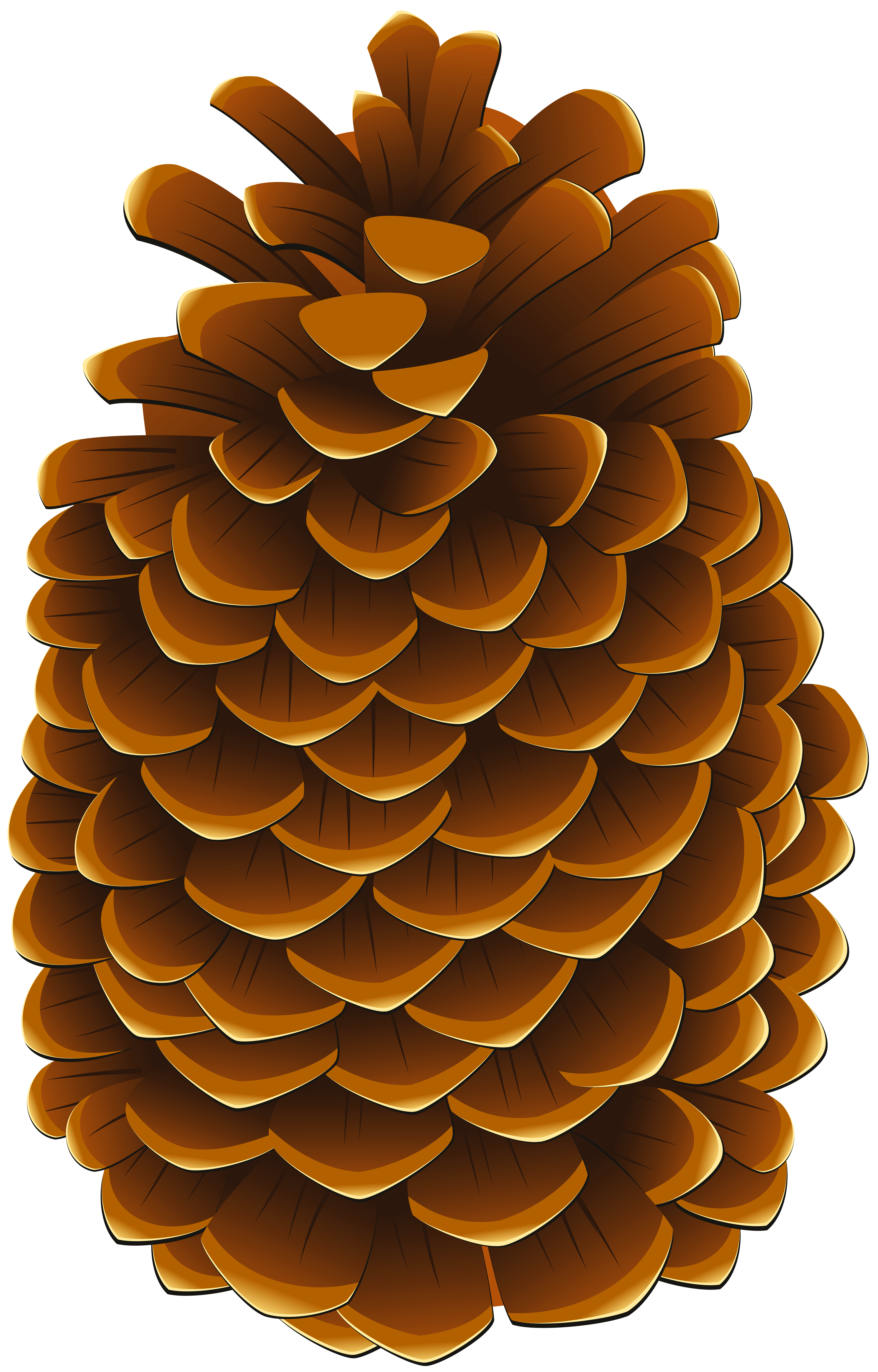 graphic free Png clip art image. Pinecone clipart.