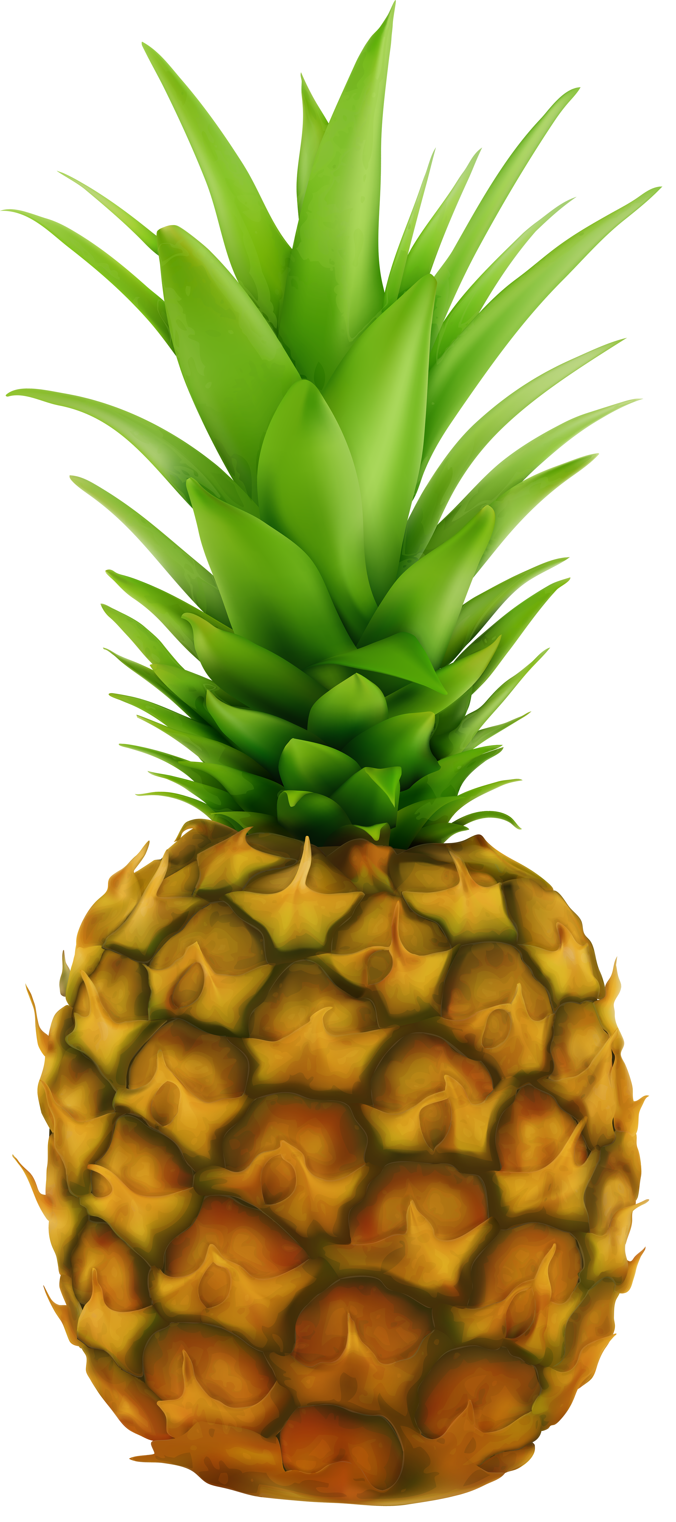 picture royalty free library Clip art image gallery. Beach transparent pineapple