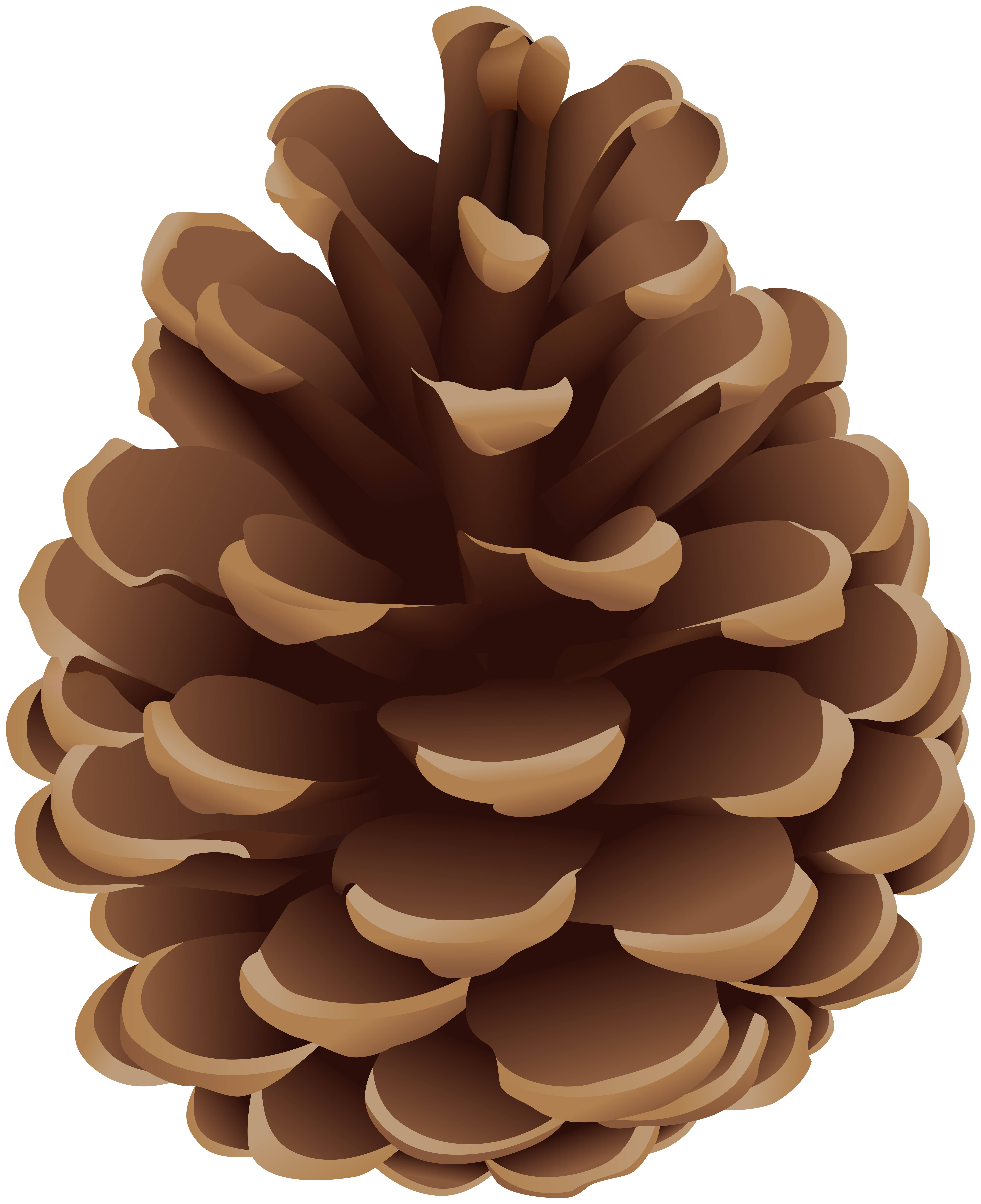 svg freeuse download Pinecone clipart. Png clip art gallery.