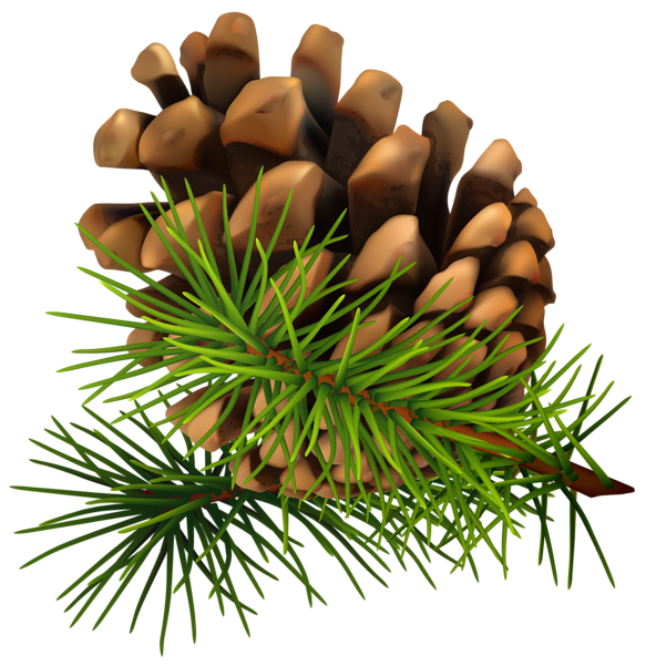 clipart transparent  best of pine. Pinecone clipart.