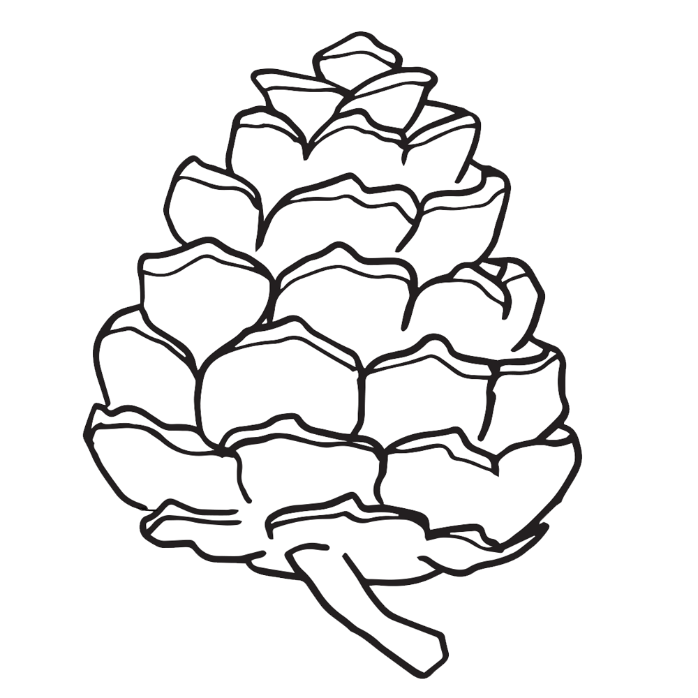 clip freeuse download Pinecone clipart black and white. Drawn pine cone simple