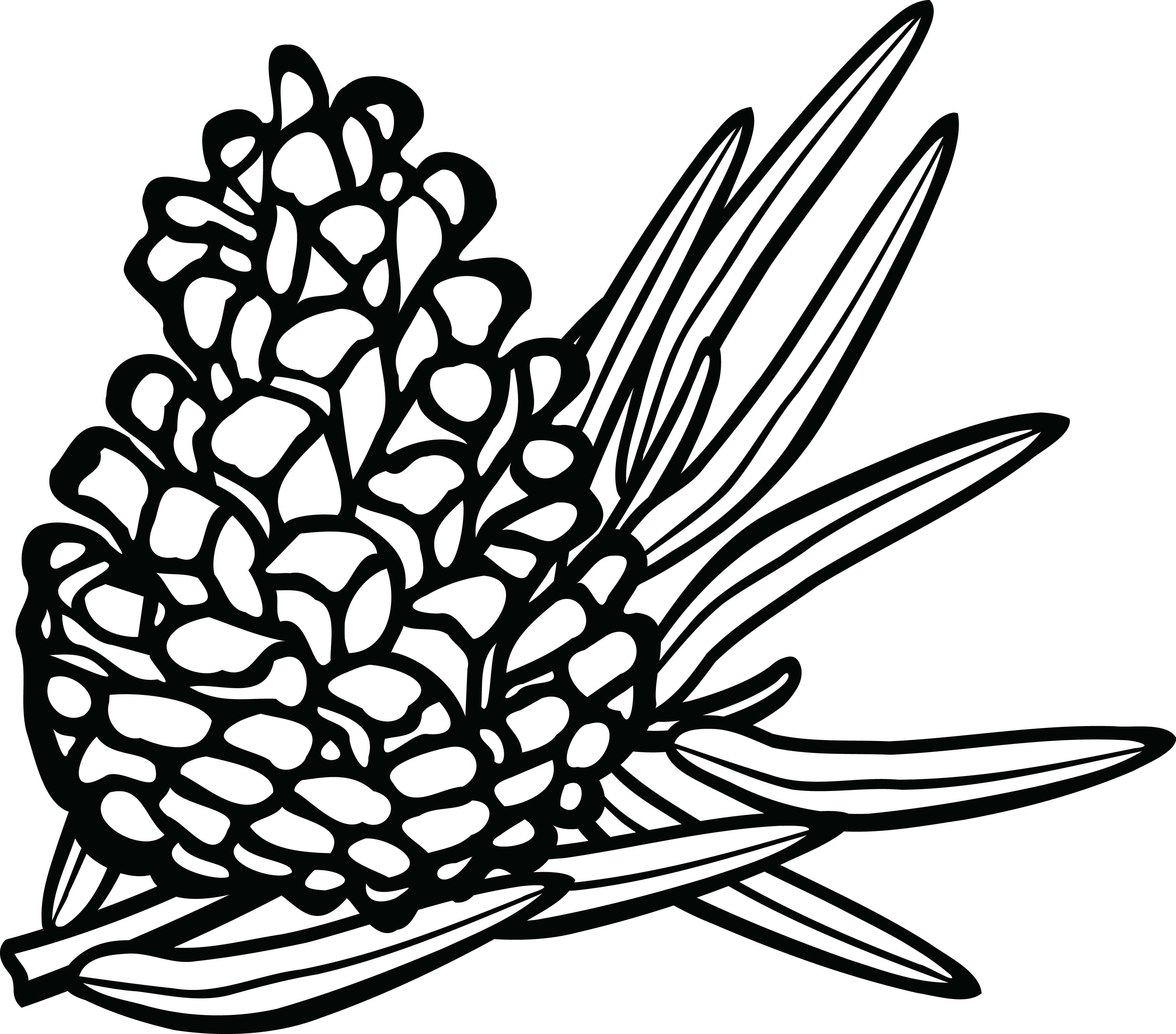 free stock Pine cone line drawing. Pinecone clipart black and white