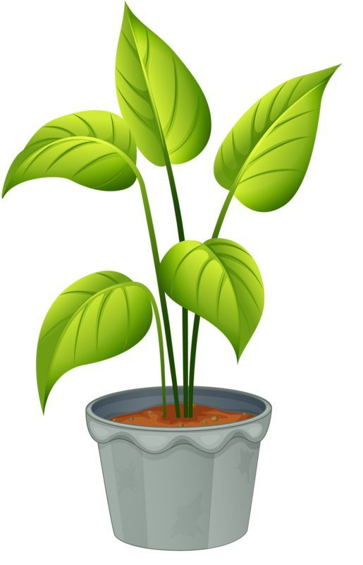 clip art transparent download Easy drawings art clip. Plant clipart