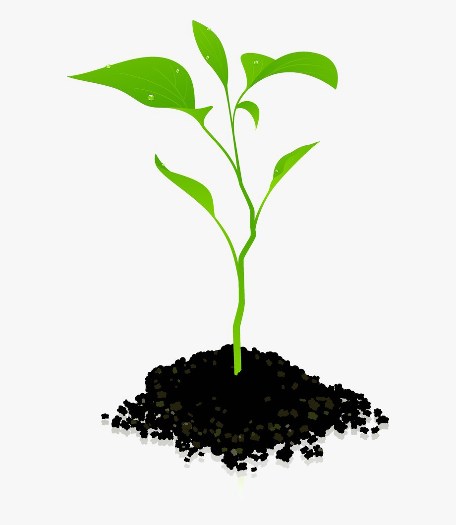 banner library Plant clipart. Growing png photos transparent