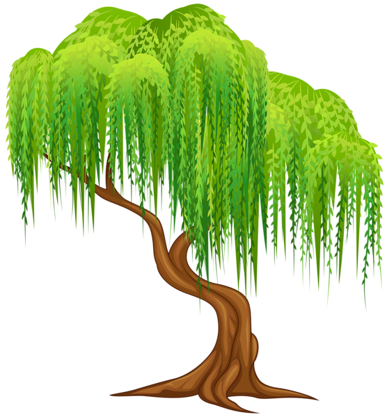 picture free Willow tree transparent png. Roots clipart landscaping.